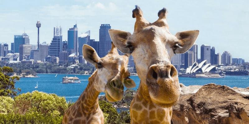 Kebun Binatang Keren Di Dunia